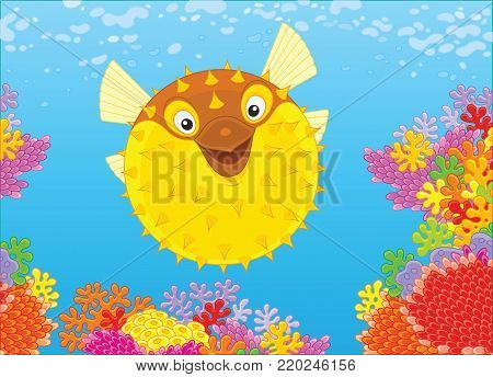 A fish-hedgehog swimming in blue water over a colorful coral reef in a tropical sea, a vector illustration in cartoon style