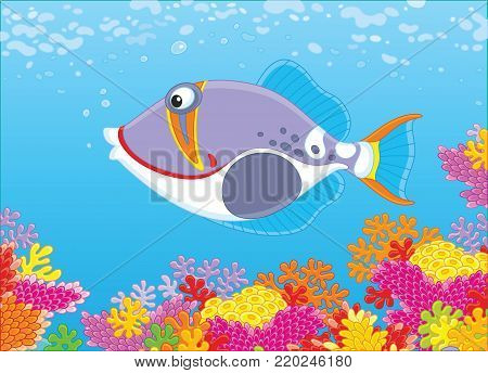 A triggerfish swimming in blue water over a colorful coral reef in a tropical sea, a vector illustration in cartoon style