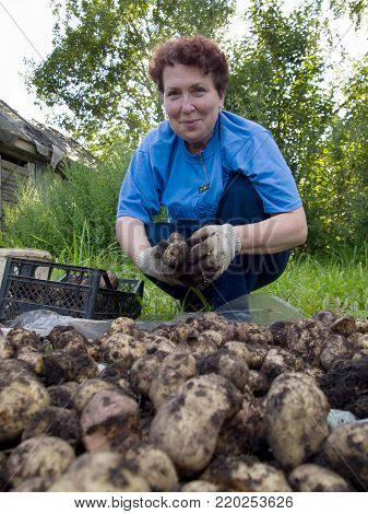 Yartsevo, Russia - August 25, 2011: An elderly woman sorts a potato crop