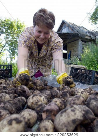 Yartsevo, Russia - August 25, 2011: A young woman is sorting a potato crop