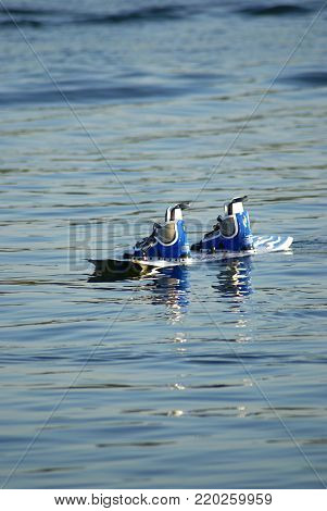 Wakebaord, binding and boots waiting for a rider on the water.