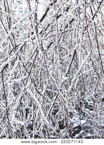 BAckground with the image of the frozen branches