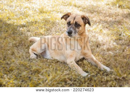 Cute Rescued Dog Laying On The Grass