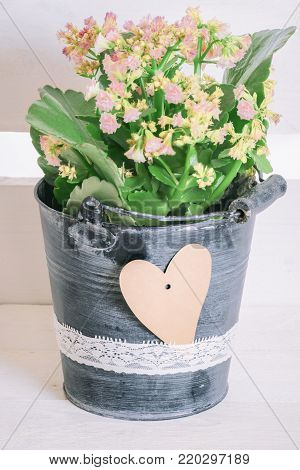 Flower in bucket and paper heart - Lovely pink blossoms in a flowerpot in bucket shape and a blank paper heart tied to the bucket with a lace ribbon, on a white wooden background.