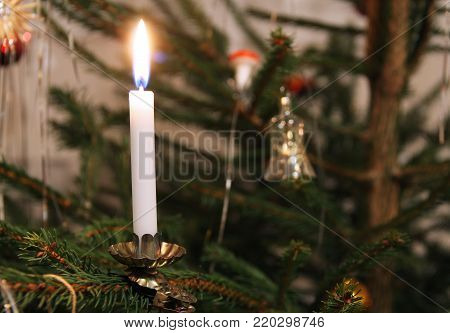 white Christmas candle on the branch of a tree