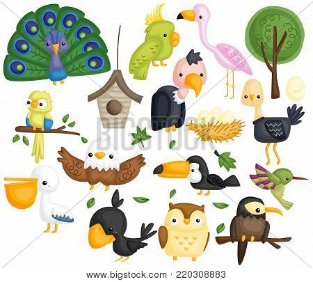 many type of birds in one vector set