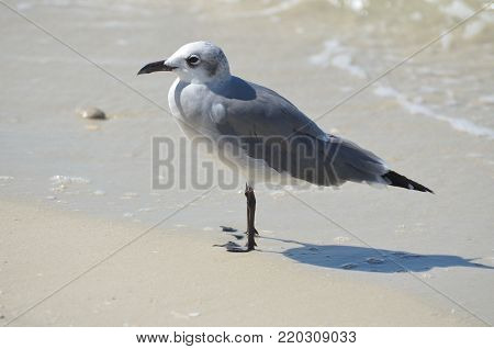 Seagull standing in sand along the ocean's edge.