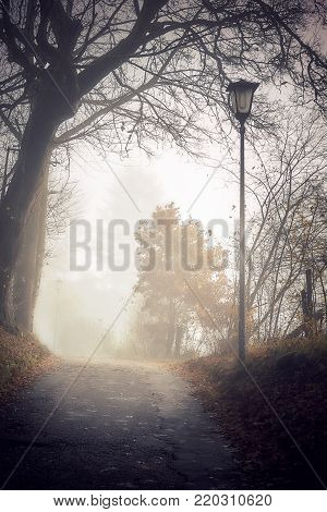 Spooky scene with country road, naked tree and old streetlight surrounded by fog