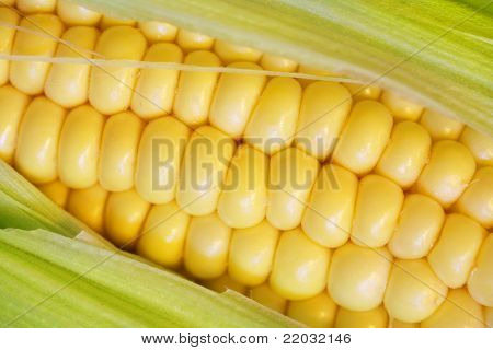 Corn Cob Closeup