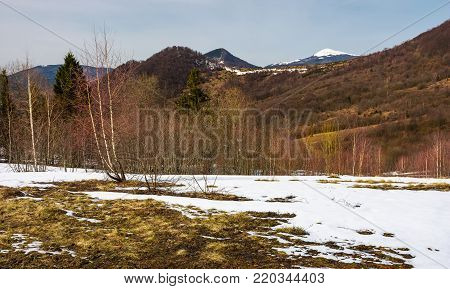 spring is coming to snowy mountain. mixed forest on a slope with snow and weathered grass. snowy peak of the mountain is seen in a distance