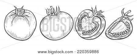 Hand drawn Tomato slice set vector. Isolated on white background. Tomato food ingredient. Engraved tomato hand drawn illustration in retro vintage style. Organic Food, sauce, dishes component