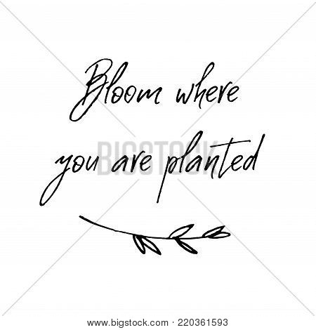 Bloom where you are planted card. Inspirational and motivational handwritten lettering quote for photo overlays, greeting card or t-shirt print, poster design. Vector illustration stock vector.