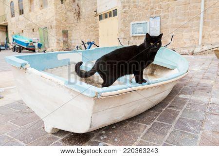Black cat in St. Julian's bay on Malta island. Beautiful animal in south Europe.