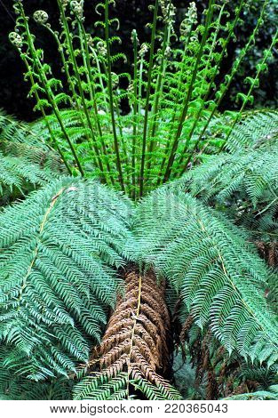A gorgeous Australian Tree Fern- photographed in the Morton National Park