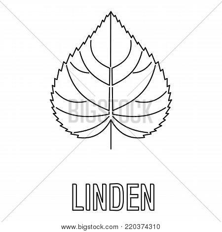Linden leaf icon. Outline illustration of linden leaf vector icon for web