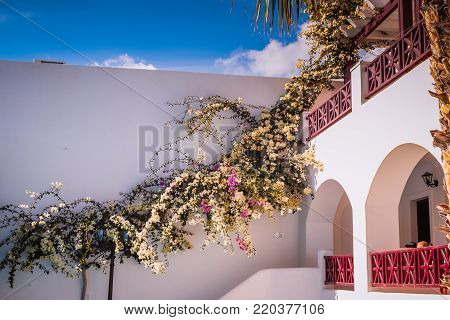 Typical house of Santorini with flower walls, Greece