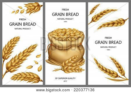 Vector realistic canvas sack filled with ripe cereals, dried wheat ears and peeled whole grains isolated on white background. Set of three vertical banners with design elements for bakery, product ad