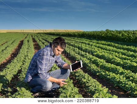 Farmer With Tablet In Soybean Field
