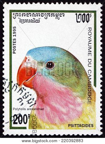 CAMBODIA - CIRCA 1995: a stamp printed in Cambodia shows princess parrot, polytelis alexandrae, bird, circa 1995