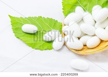 Silk cocoon in the basket on white background
