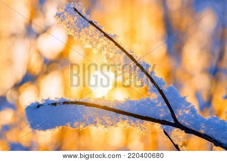 Hoarfrost on the Branches of Trees in the Forest in the Rays of the Rising Sun