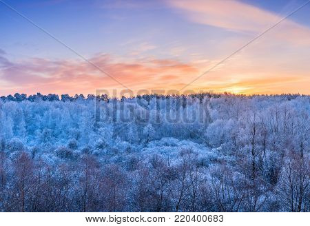 Winter landscape - frosty trees in the forest in the sunny morning under blue sky.