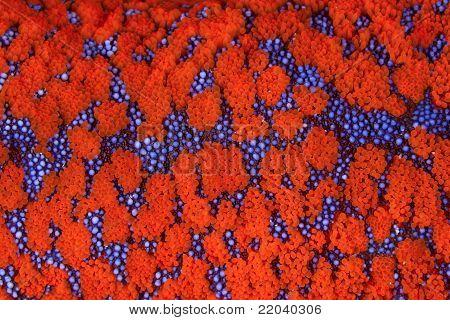 starfish pattern