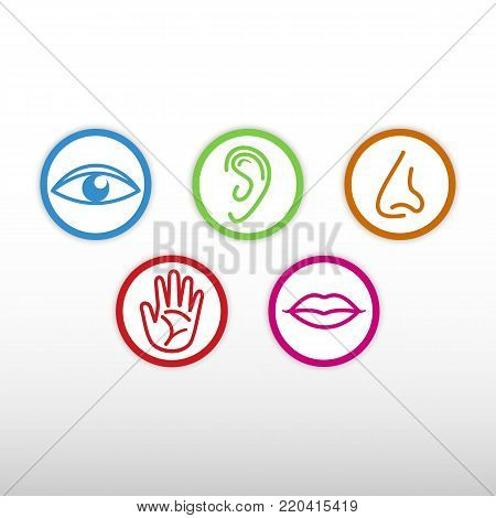 The five senses. Eye, ear, nose, hand, mouth. Colored icons.