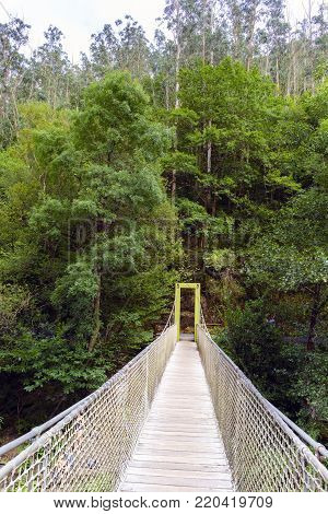 Suspension bridge of rope and wood on the river Eume in a very leafy forest. Zone very wooded and very green. Without people