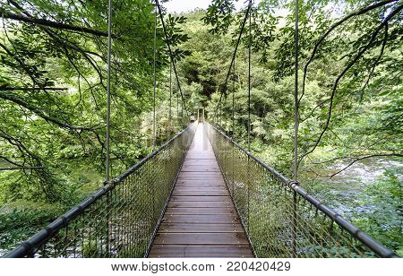 Longitudinal view of a suspension bridge and rope on the river Eume in a very leafy forest. Zone very wooded and very green. Without people