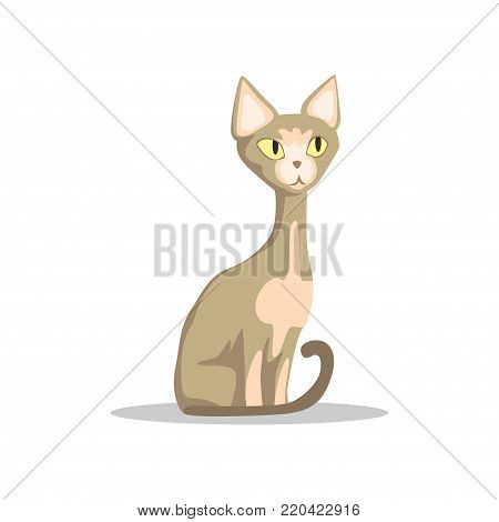Cartoon hairless cat with yellow eyes, thin tail and big ears. Sphynx breed. Domestic animal in flat style. Design for postcard, pet store or veterinary clinic. Vector illustration isolated on white.