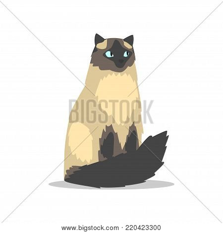 Purebred long-haired birman cat with blue eyes, dark markings on muzzle, tail and paws. Cartoon domestic animal character. Isolated flat vector design for veterinary clinic poster, banner or flyer.