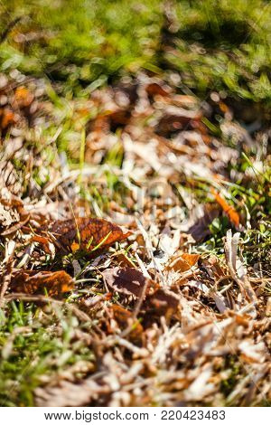 Green grass and dry grass, dry plants, dry leaves. Vintage tone, filtered effect. Nature background. Nature photography. Outdoor photography. Art photography. Selective focus.
