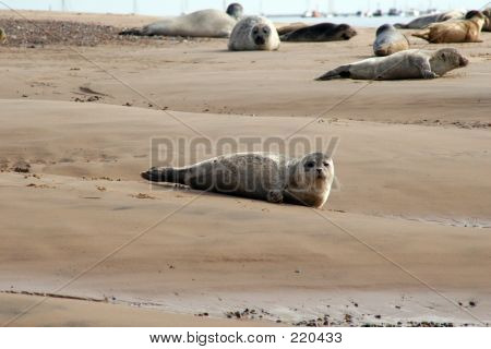 Seal Pup On Shore
