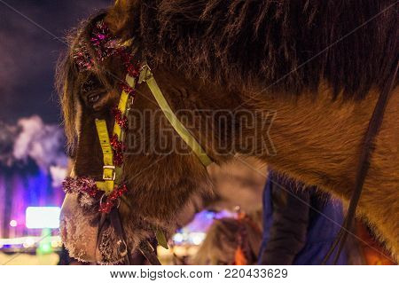 the horse in winter, sad eyes pain in the eyes of the animal