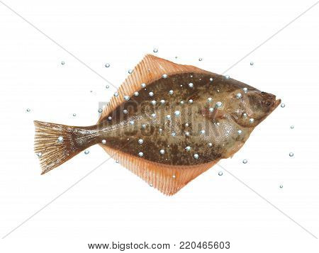 big fish flounder with bubbles on white background
