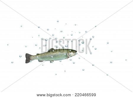 fresh rainbow trout with bubbles on white background
