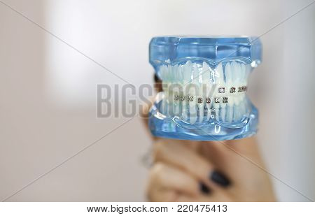 Dental and orthodontic office and lab presentation tool. Model of human jaw for dental care and orthodontics concept.