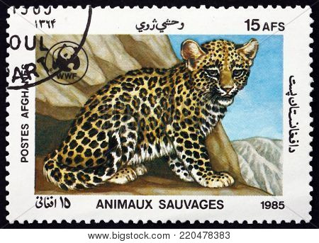 AFGHANISTAN - CIRCA 1985: a stamp printed in Afghanistan shows leopard cub, panthera pardus, wild cat, circa 1985