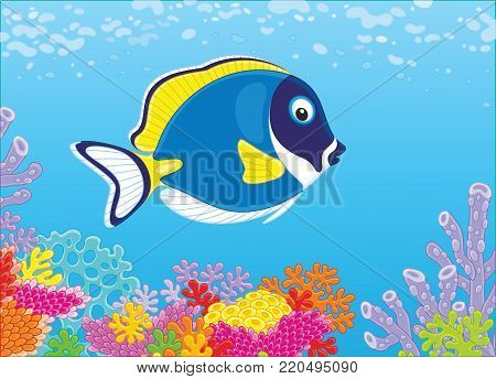 A blue-faced surgeon fish swimming in blue water over a colorful coral reef in a tropical sea, a vector illustration in cartoon style