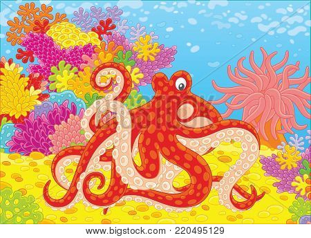 A red spotted octopus, a pink actinia and colorful corals on a tropical reef, a vector illustration in cartoon style