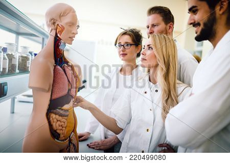 Students of medicine examining anatomical model in classroom