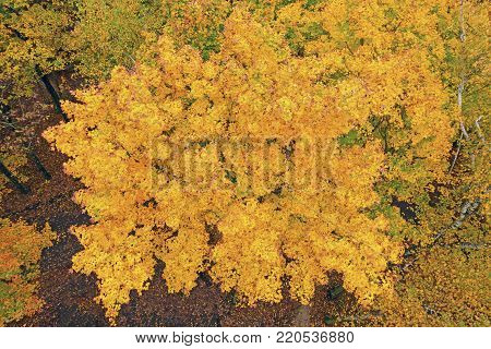 Looking Down into Fall Colors from a Lookout Tower in Potawatomi State Park in Wisconsin