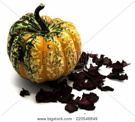Composition of pumpkin on red dry beta, one whole spotty green yellow, isolated on white background