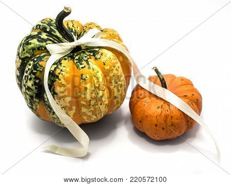 Two whole colorful pumpkins (one spotty green yellow, one orange) with a champagne bow isolated on white background