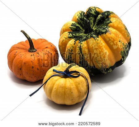 Three whole yellow, orange and spotty green yellow pumpkins with an indigo bow isolated on white background