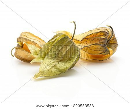 Three physalis in husk isolated on white background
