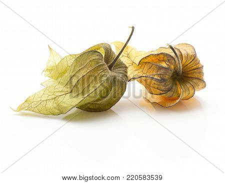 Two physalis in husk isolated on white background