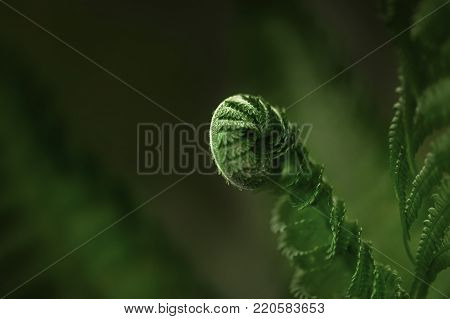 Fern green leaf in the forest. Close-up of green leaves. Low key, modern stylish toned background.