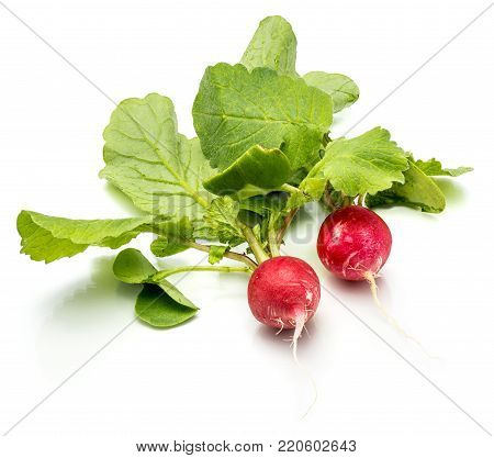 Two whole red radish with fresh green leaves isolated on white background